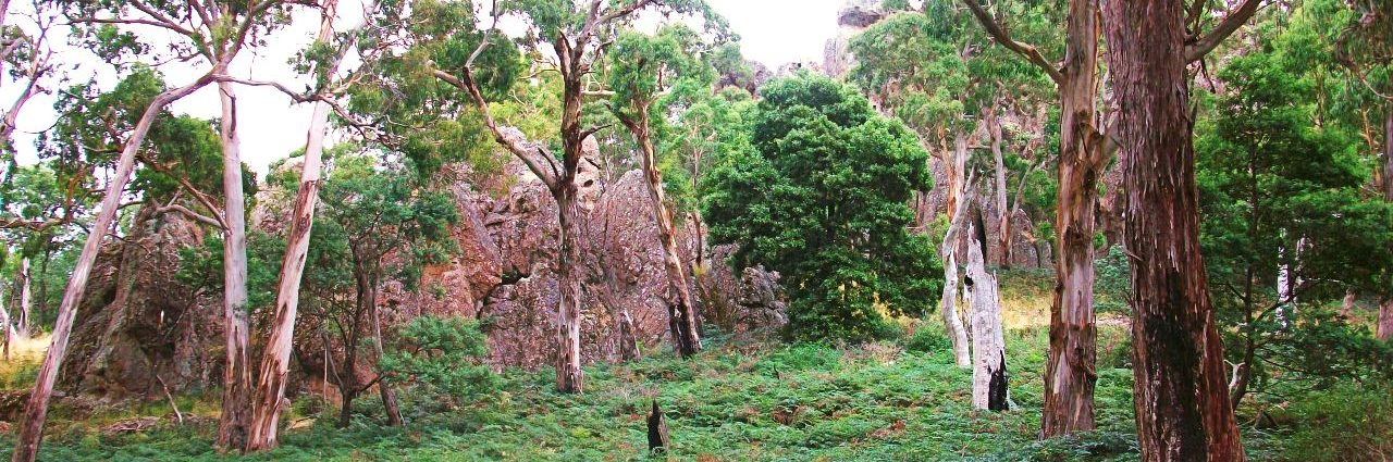 Feel the Mystery of Hanging Rock