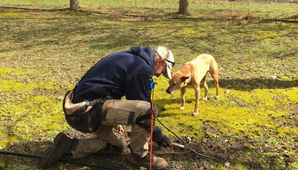 Truffle-Hunting in Northern Tasmania